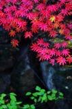 中国东北部没人谷美好的秋天风景 免版税库存照片