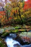 中国东北部没人谷美好的秋天风景 库存图片