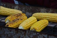 中国乡下玉米食物 图库摄影