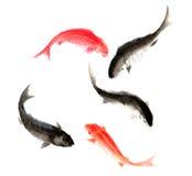 中国传统卓越的华美的装饰手画墨水鲤鱼 库存照片