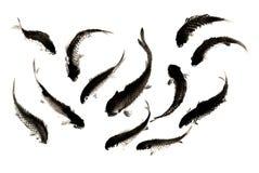 中国传统卓越的华美的装饰手画墨水鲤鱼 库存图片