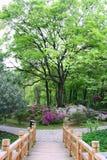 中国公园。 图库摄影