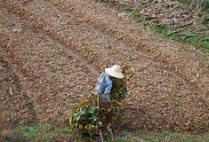 中国农夫 图库摄影