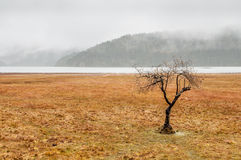 中国冬天风景 库存图片