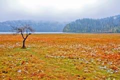 中国冬天风景 库存照片