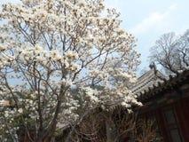 中国北京潭柘寺 库存图片