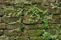 中国古老墙壁 库存图片