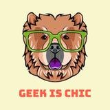中国咸菜怪杰 聪明的玻璃 聪明的狗 狗品种 减速火箭的纵向 向量 库存例证