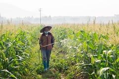 中国喷洒杀虫剂的玉米农夫 库存图片