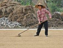 中国在街道上的妇女传播的米 库存照片