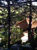 中国塔状树 免版税图库摄影
