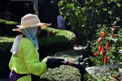 中国妇女花匠浇灌的花开花 免版税图库摄影
