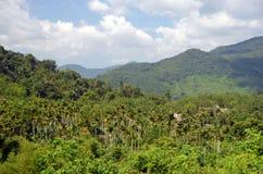 中国密林,海南海岛  免版税库存照片