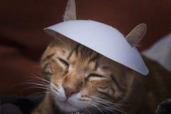 中国小猫 图库摄影