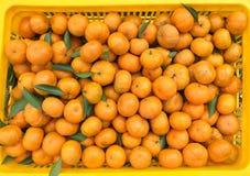 中国小cumquat桔子 免版税图库摄影