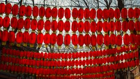 中国春节灯笼glim scaldfish 图库摄影