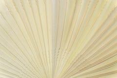 中国有气味的木折叠的爱好者 图库摄影