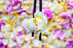 中国棍子拿着一朵白色茉莉花 免版税库存图片