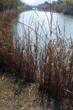 中国沼泽地自然保护风景风景 库存图片
