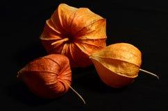 中国灯笼植物 免版税库存照片