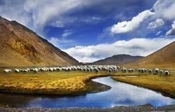中国的西藏风景 免版税库存图片