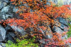 中国的长白山在秋天 库存图片