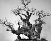 中国盆景艺术,抽象树根 免版税库存照片