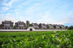 中国茶园古色古香的建筑学在峨眉山 免版税库存图片