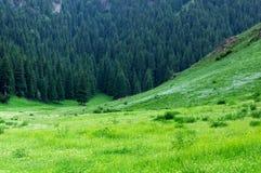 中国草原风景 库存图片