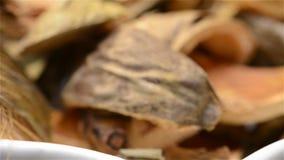 中国草本医学Arecae Pericarpium或槟榔树果皮转动 股票录像