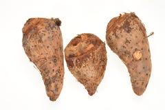 中国薯类 免版税库存照片