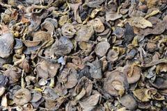 中国蘑菇 库存图片