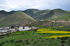 中国西藏左贡村庄强奸花 免版税库存照片