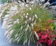 中国银色草和天堂般的竹灌木 图库摄影
