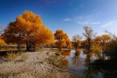 中国风景 图库摄影