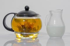 中国绿茶芽在一个玻璃茶壶开花 水罐牛奶 库存照片