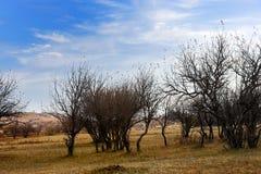 中国Bashang草原风景 免版税图库摄影
