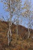 中国Bashang草原风景 免版税库存图片