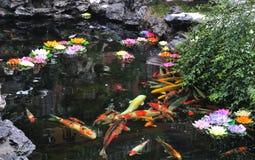 中国koi池塘 库存图片