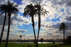 击中天空的高棕榈 免版税库存照片