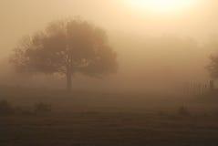 中央佛罗里达有雾的橡木牧场地 免版税库存图片