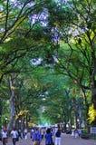 中央公园在夏天,纽约,美国 免版税图库摄影