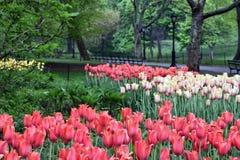 中央公园春天 库存图片