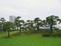 中央公园杉木东京结构树 库存图片