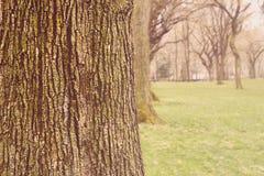 中央公园树  图库摄影