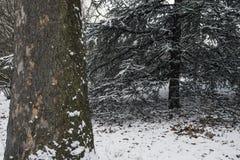 中央公园,在雪风暴以后的纽约 图库摄影