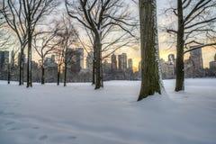 中央公园,纽约在冬天 库存图片