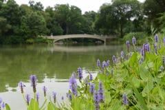 中央公园,纽约城在春天 免版税库存照片