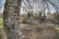 中央公园,纽约城早期的春天 库存照片