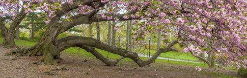 中央公园,纽约春天 库存照片